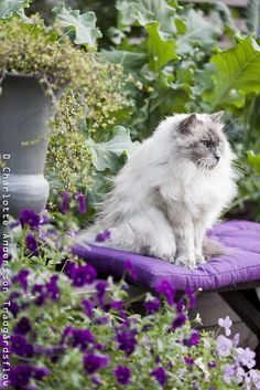 Cat princess in the garden...