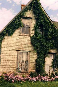 farm house with ivy