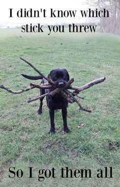 Now..which stick did you throw again?   http://ift.tt/1QRrZZk via /r/funny http://ift.tt/1NSQ73h  funny pictures