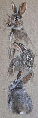 les lapins de garenne attitudes
