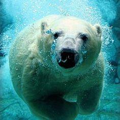 Fake Wallpaper Arctic Animals