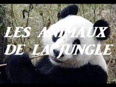animaux de la jungle 2 French Songs, French Teacher, Danger, Site Web, Panda Bear, Madagascar, Films, Presentation, Art