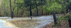 Cheaha State Park S56