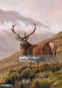 Stock Illustration : Red deer stag in upland landscape