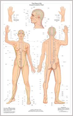 The meridians in Chinese Medicine