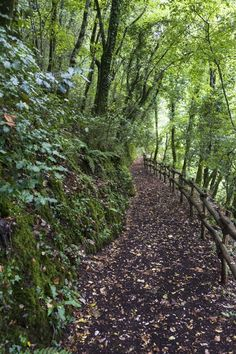 Foresta Umbra: The Shady Forest - The Crowded Planet Best Places To Travel, Places To See, Travel Tours, Travel Destinations, Places Around The World, Around The Worlds, Hiking Europe, Best Hikes, Ultimate Travel