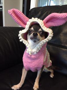 rabbit??
