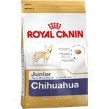 PetClick Chihuahua Breeds, 8 Month Olds, Cavalier King Charles, Health And Nutrition, Amazon, Amazons, Riding Habit