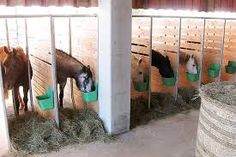 Active stall design but could be used to feed supplements in a track system. The spaces are perfect for one horse only.