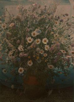 Edward Steichen - Bouquet of daisies, lupines, and cornflowers, c.1908                                                                                                                                                                                 More