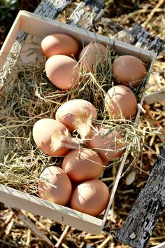 "Discover  Gabriola...  Things to do....  Enjoy a breakfast complete with farm fresh eggs from The Boulton's 'Somerset Farm.""   Www.DiscoverGabriola.com"