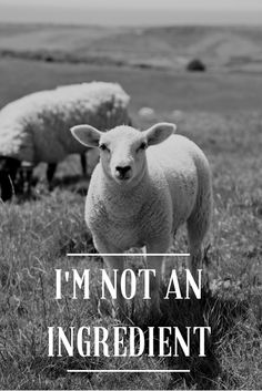 Love animals, please don't eat them. #vegan