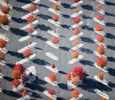 Parking Lot Planters, East St. Louis, IL 2010 Photography by Alex S. MacLean