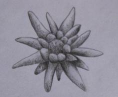 Edelweiss-1.jpg (550×453)