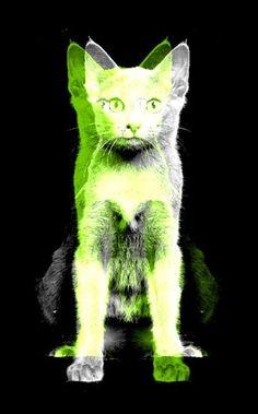 neon cat <3