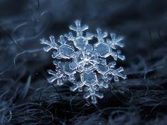 macro fotografie di fiocchi di neve