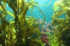 SCUBA MONTEREY: Monterey SCUBA Diving Information Page