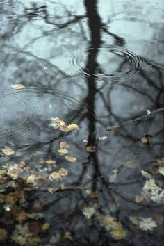 Raindrops - (by Corrie Bouman)