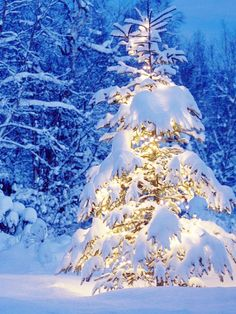 I don't keep Christmas anymore, but that doesn't mean I don't love a snowy, beautiful, shining evergreen tree!
