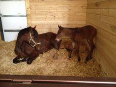 Little filly born Apr 11