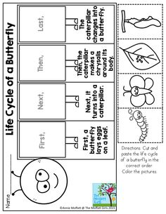 Life Cycle of a Butterfly- Great for Kindergarten!