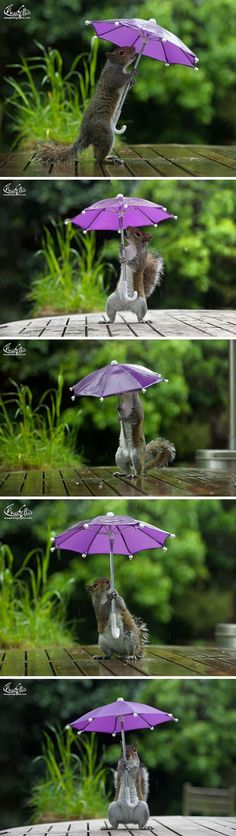 This Photographer Gives Squirrel A Tiny Umbrella To Protect Itself From Rain