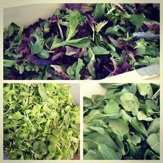 #Queens has plenty of #greens! #spinach #mustardgreens #springmix #farmersmarketnyc Forest Hills Greenmarket