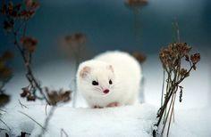 Beautiful Wildlife Photography | Smashing Picture