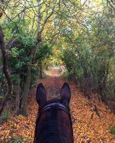 Autumn here we come! Trail Riding Horses, Horse Riding, Horse Trails, Beautiful Horse Pictures, Beautiful Horses, Horse Facts, Go Ride, Horse Ranch, Horse Photography