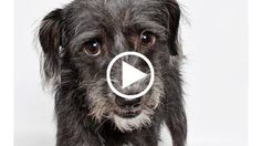 Shelter Dogs Get Glamour Shots To Help Them Find Homes