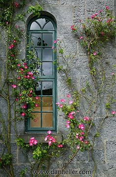 Climbing pink roses accent this unique window perfectly.