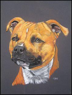 Staffie handmade portrait. Follow my pet portraits on FB : facebook.com/artiste.animalier