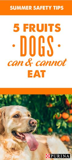 Dr Becker Which Fruits Can Dogs Eat