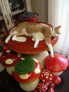 """""""What was in that cat food?"""" Diggle wondered, finding our new Magic Mushroom patio table set, and the bucket of catnip rats I just finished sewing. Cute Little Animals, Baby Animals, Funny Animals, Mushroom Decor, Cute Kittens, Paperclay, Aesthetic Room Decor, Cat Tree, Pretty Cats"""