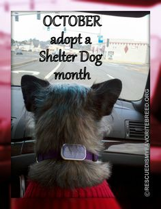 OCTOBER - Adopt a Shelter Dog month! Petfinder.com - just enter your zip code for shelters in your area.