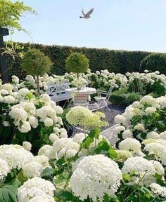 Hortensia Hydrangea, Hydrangea Garden, Amazing Gardens, Beautiful Gardens, Beautiful Flowers, Hydrangea Season, Landscape Design, Garden Design, Art Beauté