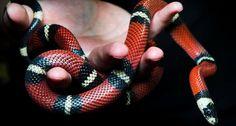 www.ta.no nyheter dyreliv slanger gross-og-gru-na-blir-dette-tillatt-i-norge s 5-50-353574