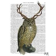 Picture showing FabFunky - Owl with Antlers, plain, Antiquarian Book Print, 20.3 x 25.4cm
