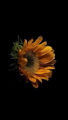 Sunflower Iphone Wallpaper, Wallpaper Nature Flowers, Flowers Nature, Colorful Flowers, Paper Sunflowers, Sunflowers And Daisies, Sunflower Pictures, Sunflower Art, Technique Photo