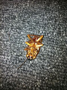 Roach found on 08/05/2013. Dead!