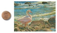 """""""Below The Spillway"""" by Wes Siegrist, 2.5 x 3.5 inches, opaque watercolor, artofwildlife.com"""