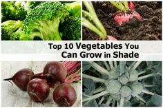 Top 10 Vegetables You Can Grow in Shade