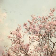 Dreamy Nature Photography, Nursery Decor, Floral Wall Art, Spring Magnolia Blossoms, Soft Pink, Blue Sky, Shabby Chic Photo on Etsy, $18.00