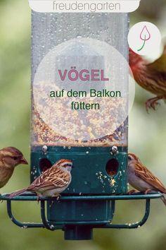 Tipps zum richtigen Füttern von Vögeln auf dem Balkon: Was erlaubt ist, was Vögel gern fressen und wie du Dreck vermeidest.  #vogelfreundlich #Vogelfutter #Balkon Gazebo, Pergola, Outdoor Lighting, Outdoor Decor, Outdoor Projects, Backyard Landscaping, Bird Feeders, Landscape, Yard Ideas