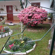 jardines vecinos anuncian la primavera