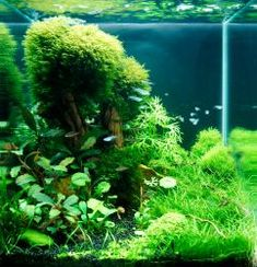 DENNERLE Nano Cube® Contest 2013. Quality test.   This whole page has tons of awesome small cube-shaped tank aquascapes. Worth a look.
