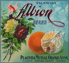 Albion Brand Citrus Crate Label – Placentia, CA