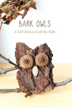 Bark Owls: A Fall Nature Craft for Kids. Carefully chip the bark into shape of owl.  Glue on 2 acorn tops for eyes and pumpkin seed for beak.