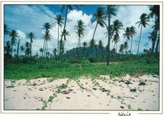 Photo: Found this old post card of #Pinneys #Beach...circa 1998? #Nevis, West Indies.