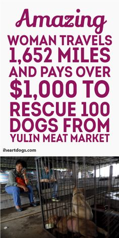 Amazing Woman Travels 1,652 Miles And Pays Over $1,000 To Rescue 100 dogs from Yulin Meat Market